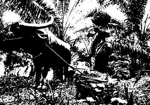 Olio di palma: come costruire un embargo commerciale
